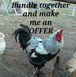 Bundle together and make me an offer!